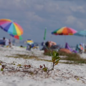 Florida Strandleben