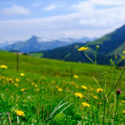 Wilder Kaiser Ellmau Wandern Österreich 00006